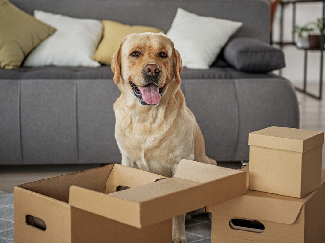 tips for moving with pets in ALABASTER, BESSEMER, HELENA & VESTAVIA HILLS, AL